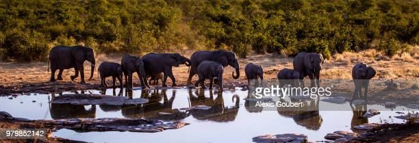 Herd of elephants, Etosha National Park, Arizona, Namibia