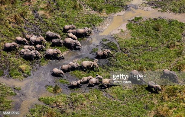 A herd of elephants in Lulimbi Virunga National Park where fighting has strained the elephant population November 2015