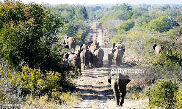 Herd of elephants in Madikwe Game Reserve, South Africa