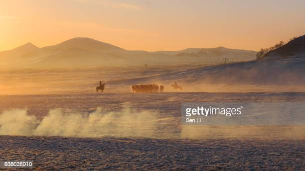 Herd of Horses on Snowfield, Inner Mongolia