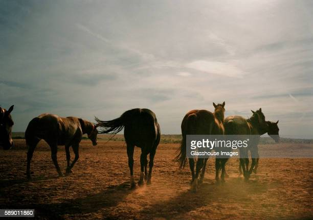 herd of horses, rear view, texas, usa - texas stock pictures, royalty-free photos & images