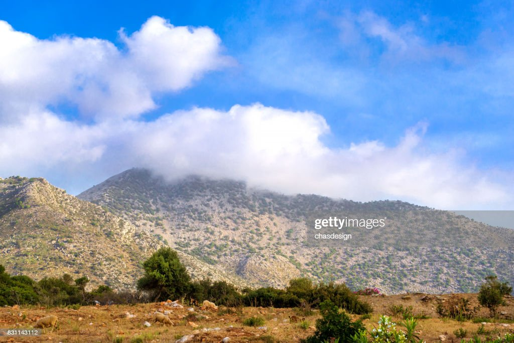 Herd Of Mountain Sheep Bali Village Greece High Res Stock Photo Getty Images