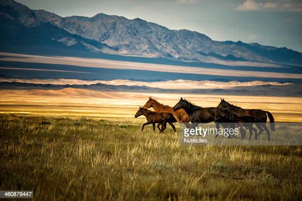 herd of wild horses in kazakhstan - cazaquistão - fotografias e filmes do acervo