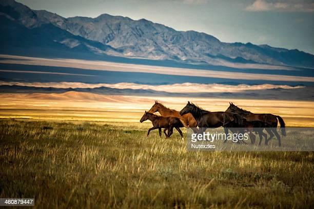 herd of wild horses in kazakhstan - カザフスタン ストックフォトと画像