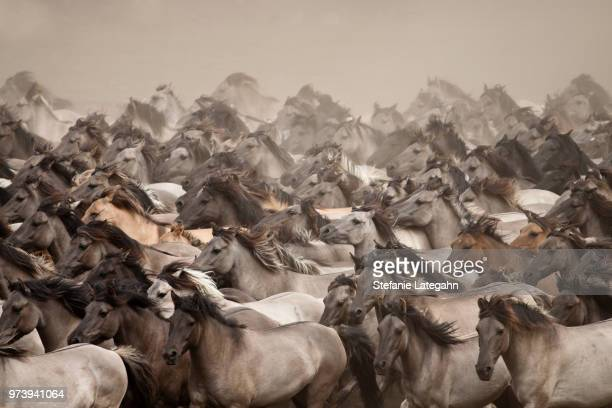a herd of wild horses. - animals in the wild stock pictures, royalty-free photos & images