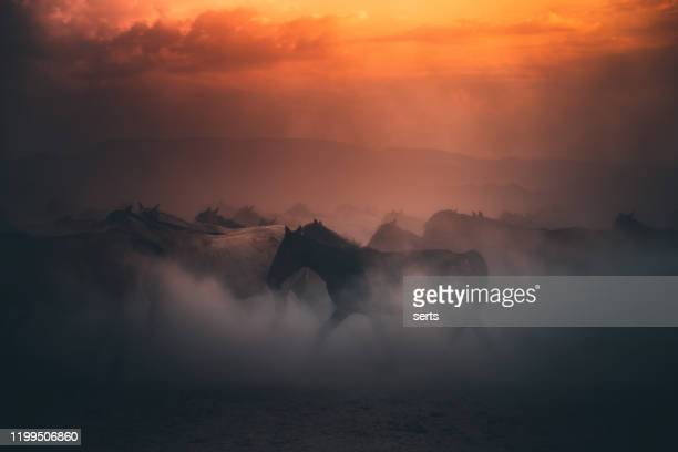 herd of wild horses running gallop in dust at sunset time - animals in the wild stock pictures, royalty-free photos & images