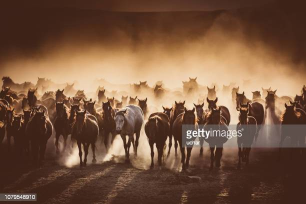 herd of wild horses running in dust - horse stock pictures, royalty-free photos & images