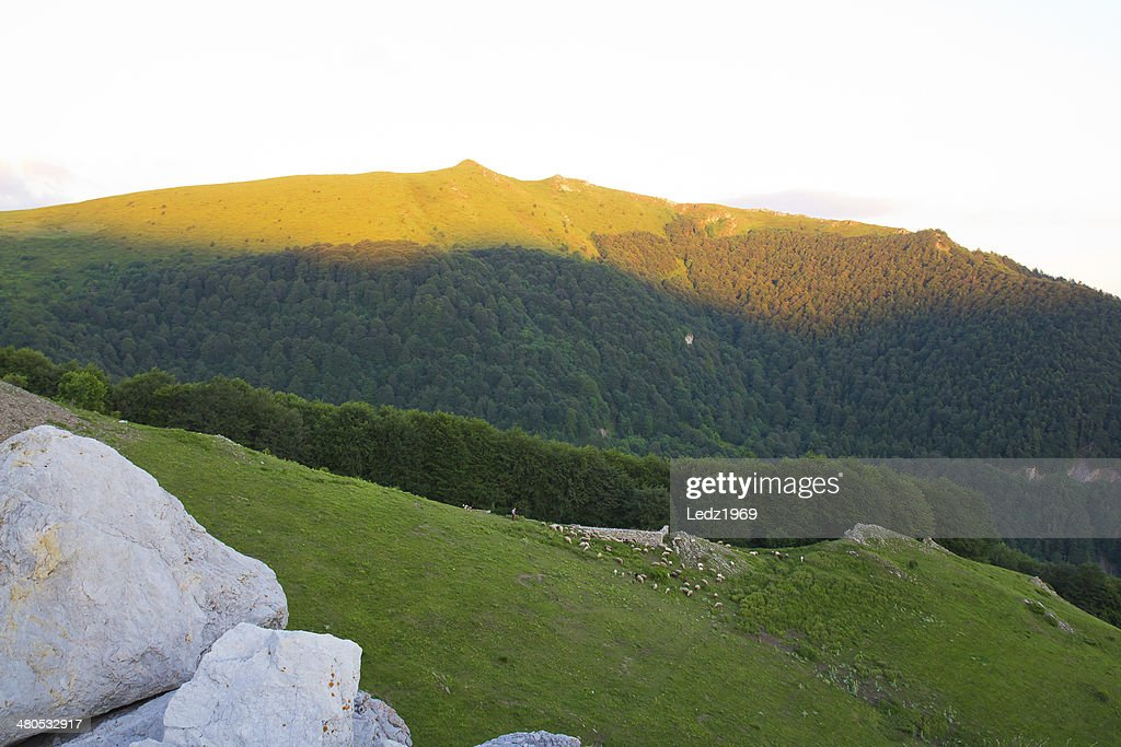 Herd on mountain slope : Stockfoto