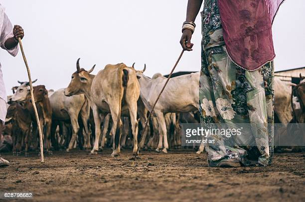 A herder and the cattle