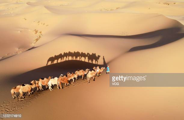 Herder drives camels on Badain Jaran Desert on May 1, 2020 in Alxa League, Inner Mongolia Autonomous Region of China.