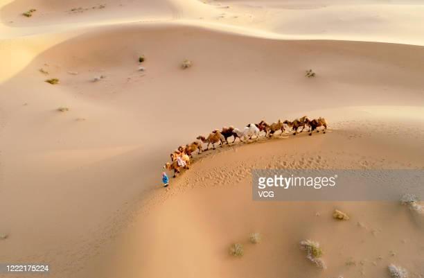 Herder drives camels on Badain Jaran Desert on May 1, 2020 in Alxa League, Inner Mongolia Autonomous Region of China.