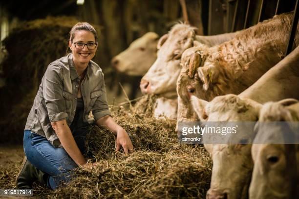 Herder, Rasen, Kühe füttern