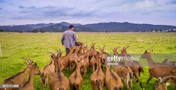 Groupe d'alimentation éleveur de chèvres