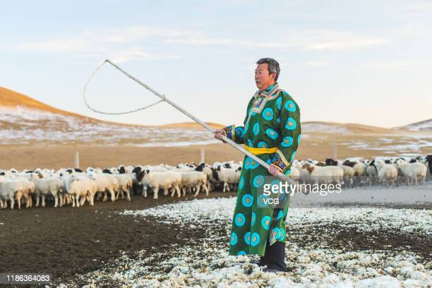 Herder grazes sheep on October 30, 2019 in Xilingol League, Inner Mongolia Autonomous Region of China. About 1,000 agriculture sources will directly...