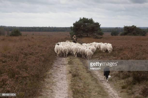 Herder op de hei