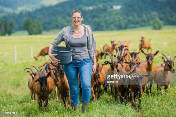 herder walking with group of goats - brown jeans stock photos and pictures