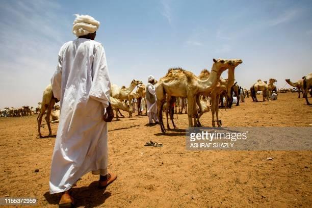 A herder walks towards camels at ElMolih camel market west of the Sudanese capital's twin city of Omdurman on July 10 2019 In ElMolih a vast swathe...
