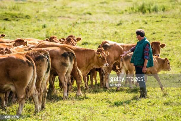 pastor con el grupo de vacas en el paisaje - marrón fotografías e imágenes de stock