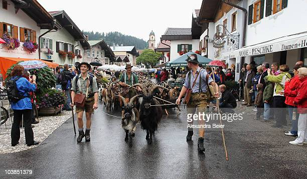 Herders dressed in traditional Bavarian clothes drive goats down the Alps on September 4, 2010 in Mittenwald, Germany. Every year cows, sheep and...
