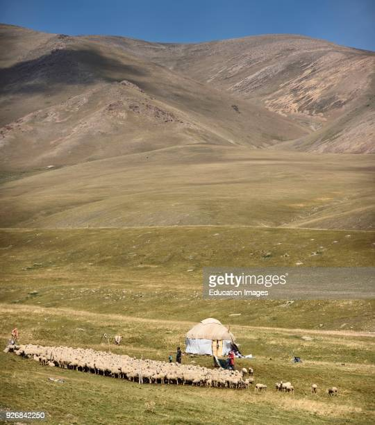 Herding family with yurt and sheep in remote Assy Turgen Plateau Kazakhstan