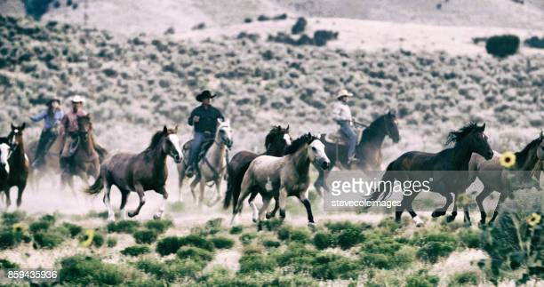 herding horses - appaloosa stock pictures, royalty-free photos & images