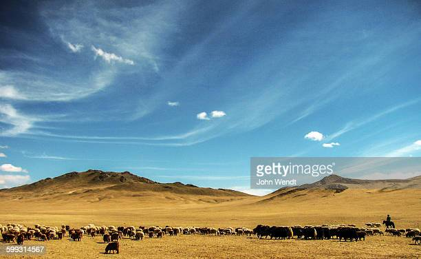 Herding under the Mongolian sky