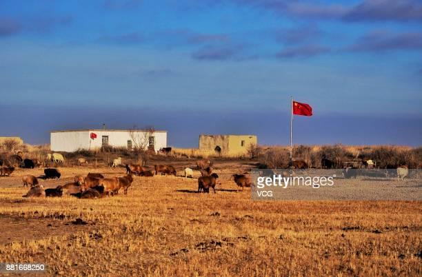 Herds begin winter migration on November 27 2017 in Altay Xinjiang Uyghur Autonomous Region of China Kazak herdsmen begin the winter migration in...