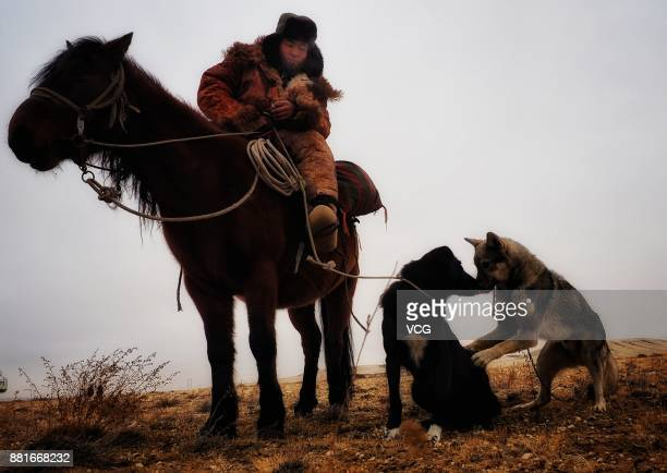 A herdsman and shepherd dogs rest during the winter migration on November 28 2017 in Altay Xinjiang Uyghur Autonomous Region of China Kazak herdsmen...