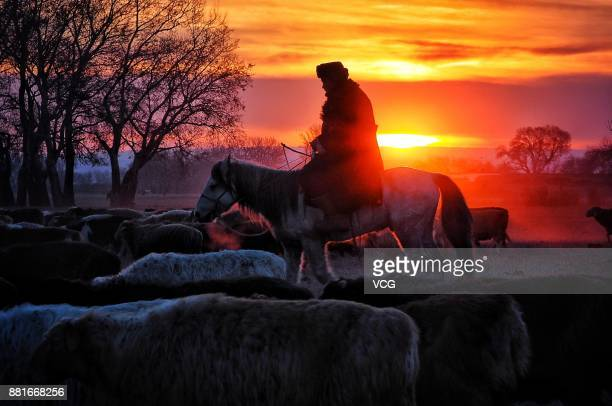 A herdsman drives the herd during winter migration on November 27 2017 in Altay Xinjiang Uyghur Autonomous Region of China Kazak herdsmen begin the...