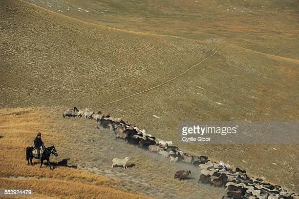 Herdsman on horseback, Kyrgyzstan