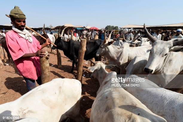 A herdsman stands beside herds at a cattle market in Lafia capital of Nasarawa State northcentral Nigeria on January 4 2018 Nomadic cattle herders...