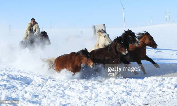 A herdsman tames horses on the snowcovered grassland on December 26 2017 in Xilingol League Inner Mongolia Autonomous Region of China Xilingol...