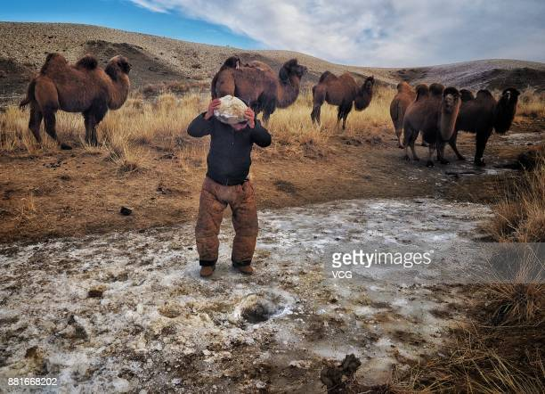 A herdsman uses a stone to dig the ice for water during the winter migration on November 28 2017 in Altay Xinjiang Uyghur Autonomous Region of China...
