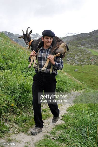 Herdsman Valentin carries a goat as he leads a flock of goats to an alpine pasture on June 28 2013 in SaintMartindeBelleville French Alps during a...