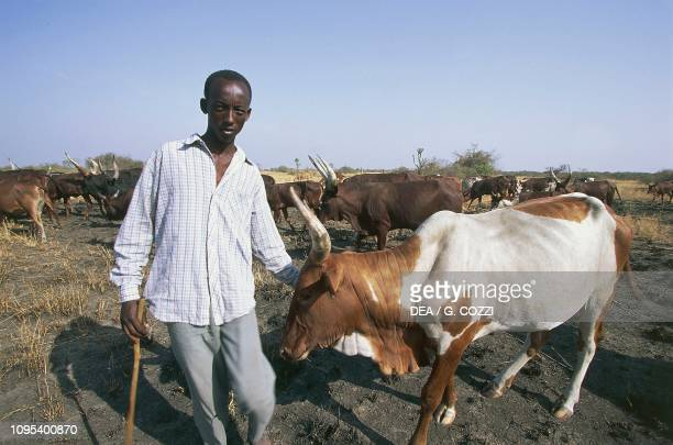 Herdsman with Ankole cattle surroundings of Queen Elizabeth National Park Uganda
