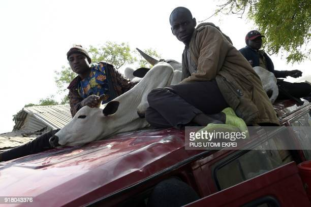 Herdsmen sit on the roof of a vehicle beside a cattle as they arrive at a cattle market in Lafia capital of Nasarawa State northcentral Nigeria on...