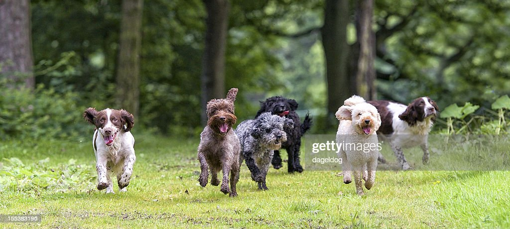 here come the girls... : Stock Photo