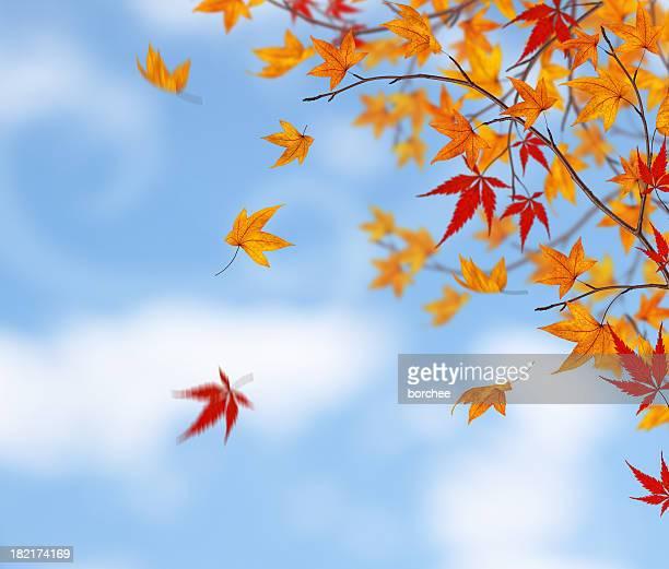 eis o outono - novembro azul - fotografias e filmes do acervo