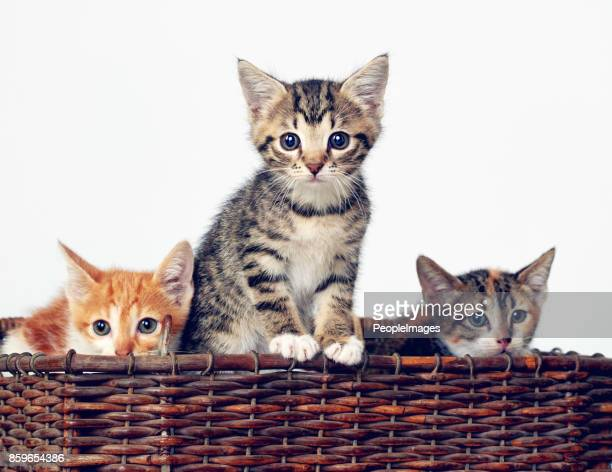 here comes the cuteness - three animals stock pictures, royalty-free photos & images