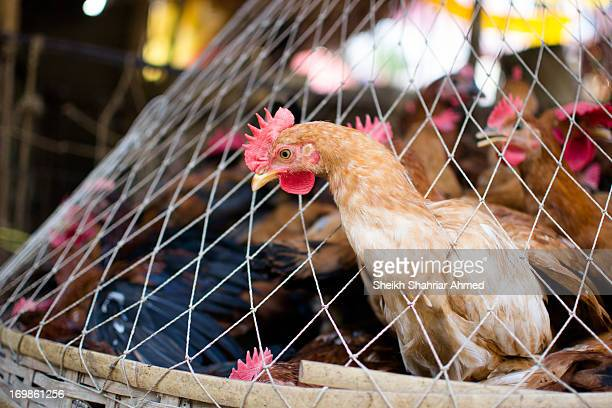 Here in Bangladesh, Sliced-Diced-Packed chicken is becoming popular these days. But the OLD SCHOOL Chicken shops are still dominating. Real chickens....