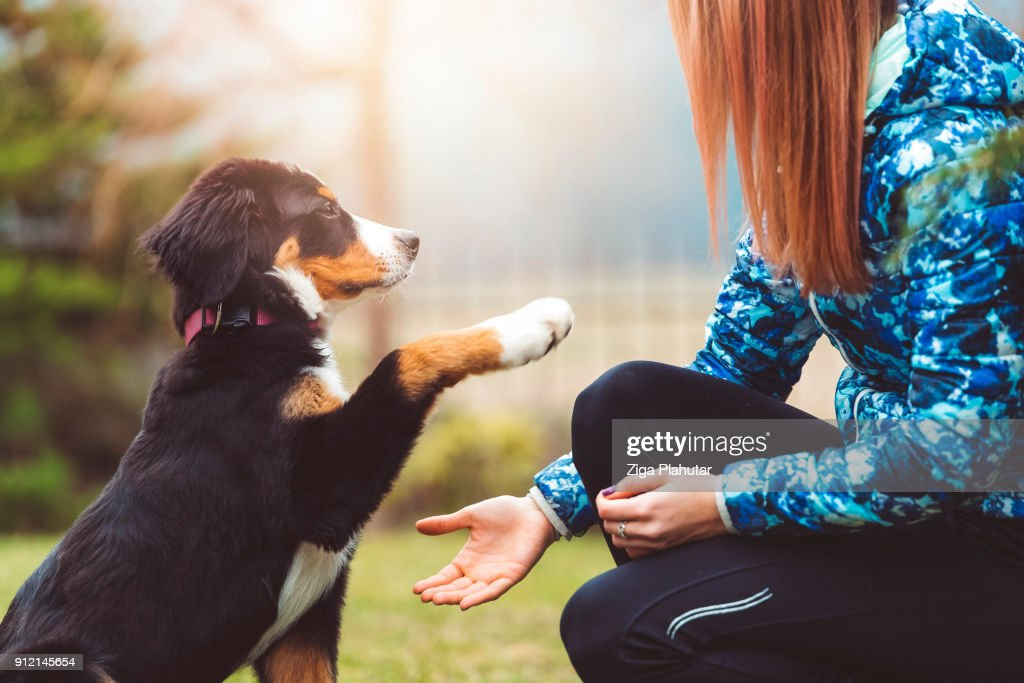 Here you go human, you can have my paw : Stock Photo