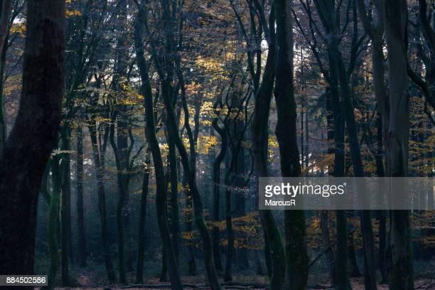 Herfstbos met zon en schaduw
