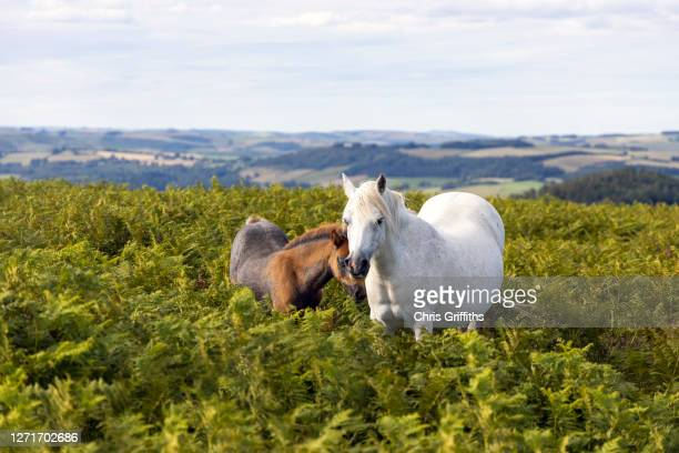 hergest ridge, welsh marches, united kingdom - local landmark stock pictures, royalty-free photos & images