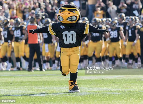 Herky the Hawk mascot of the Iowa Hawkeyes runs onto the field at the start of the 102nd Rose Bowl game between Iowa and the Stanford Cardinal played...