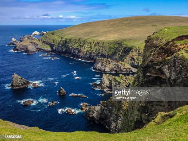 hermaness national nature reserve, shetland islands, scotland - isole shetland foto e immagini stock