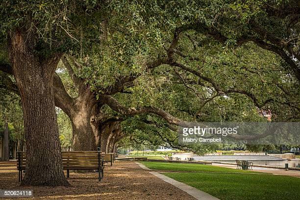 Hermann Park Oak Trees