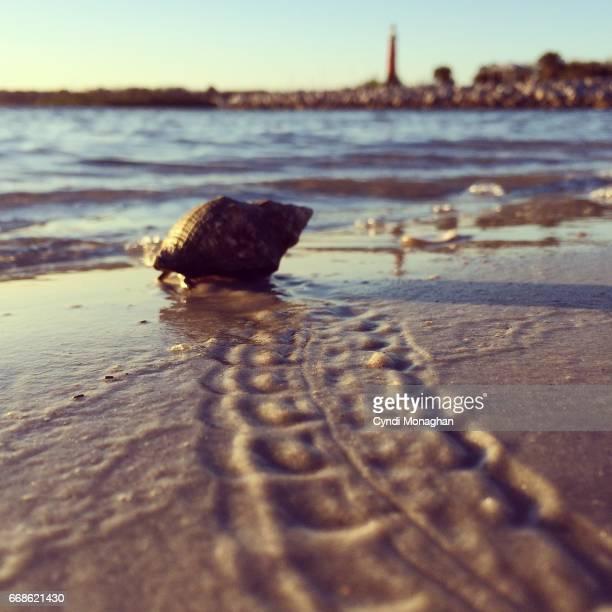 Hermit Crab Crawling on Beach