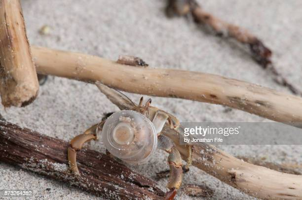 hermit crab in plastic - hermit crab stock pictures, royalty-free photos & images