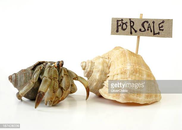 A hermit crab looking for a shell to live in