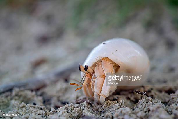 hermit crab on sand - hermit crab stock pictures, royalty-free photos & images